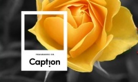Caption Fragrance Co